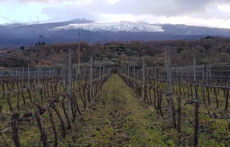 יינות הקינוח המדהימים של סיציליה